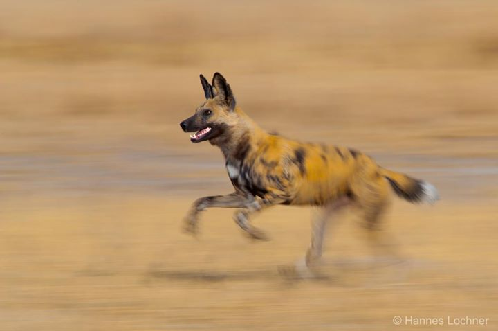 Pangolin Photo Safaris cover