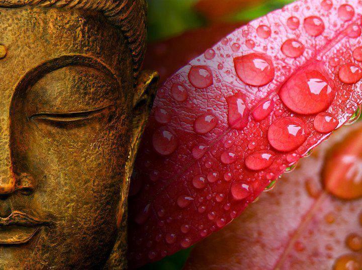 Shanti Shala Yoga & Wellness Center cover