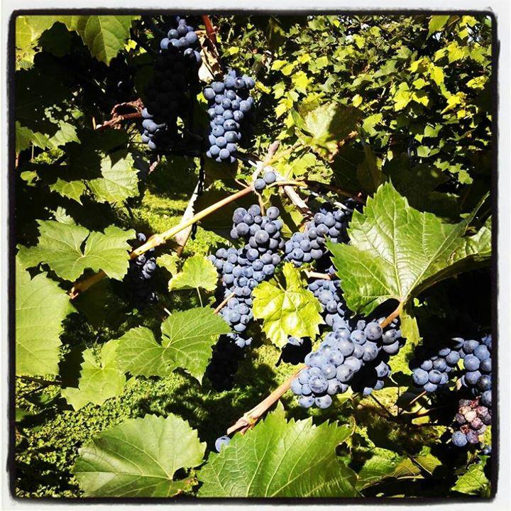 Rushland Ridge Vineyards & Winery cover