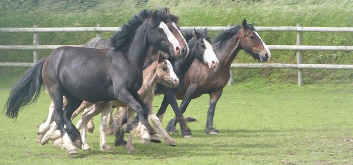 Bransby Horses - Rescue and Welfare cover