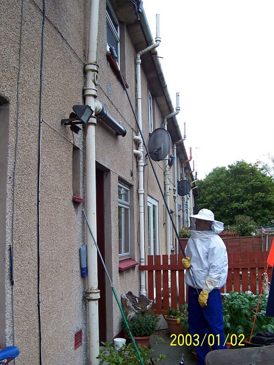 Wasp Nest Removal Dudley cover