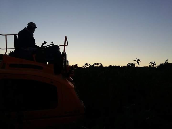 Sawmill Creek Vineyards cover
