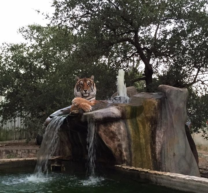 Austin Zoo cover