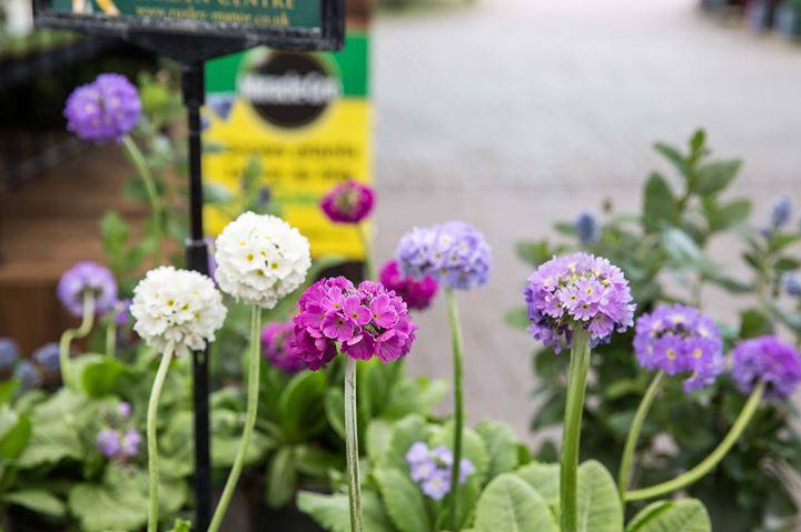 Ruxley Manor Garden Centre cover