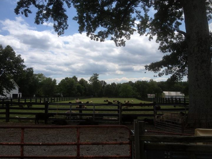 Turner Farm cover