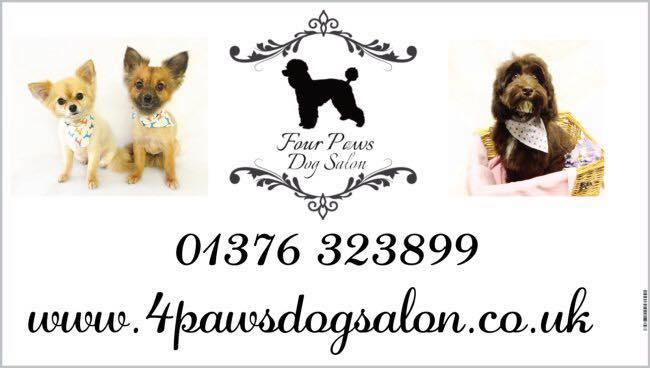 Four Paws Cat & Dog Grooming Salon cover