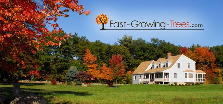 Fast Growing Trees Cover