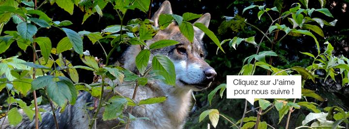 Alpha, Le Parc des Loups du Mercantour cover