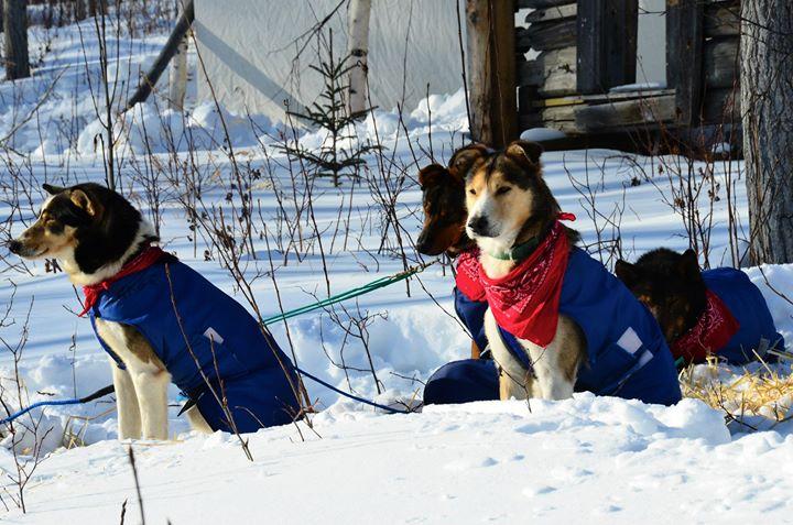 Alpine Veterinary Medical Centre cover