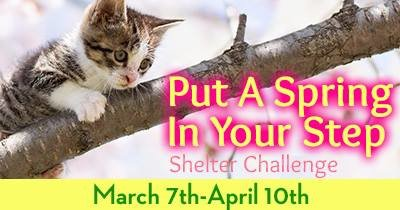 Shelter+ Challenge by The Animal Rescue Site cover