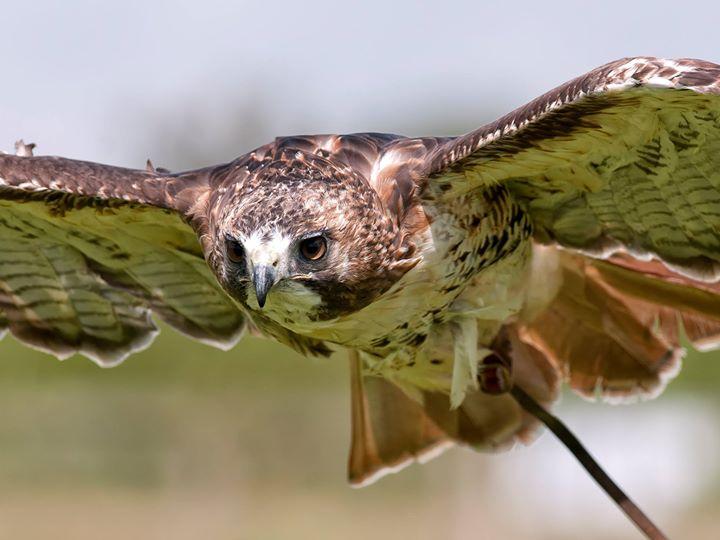 The Cornish Birds of Prey Centre CIC cover