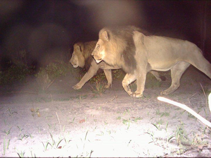 Predator Conservation Trust cover