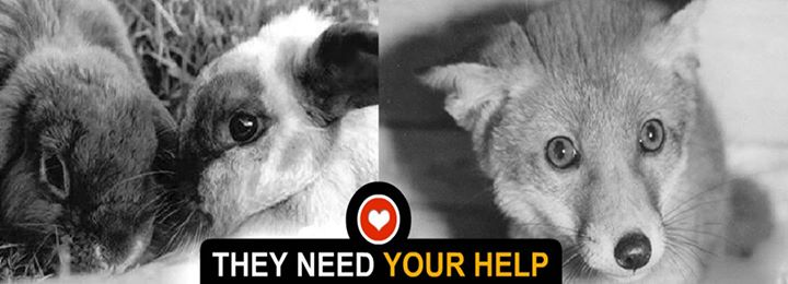 Animal Rescue Charity (Registered Charity No 1007182) cover