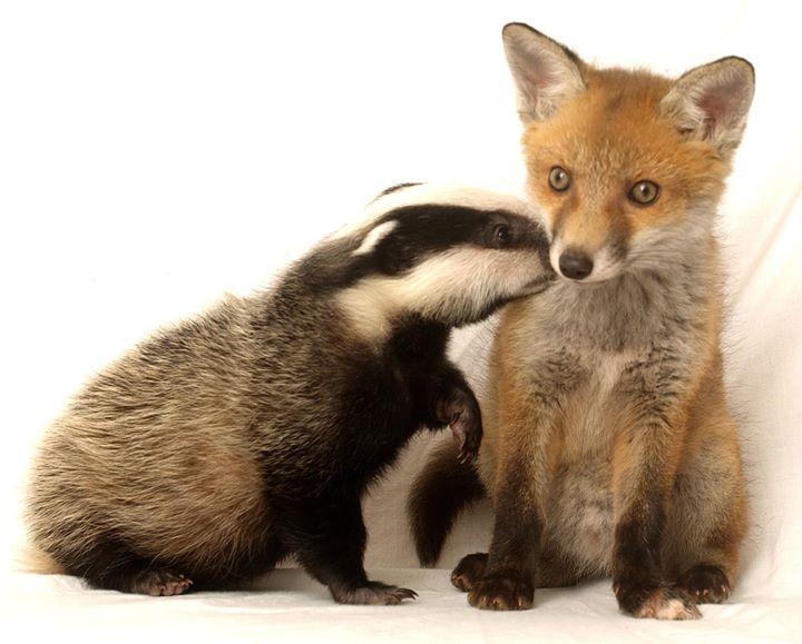 Nuneaton & Warwickshire Wildlife Sanctuary cover