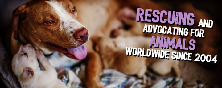 ARME - Animal Rescue, Media & Education cover