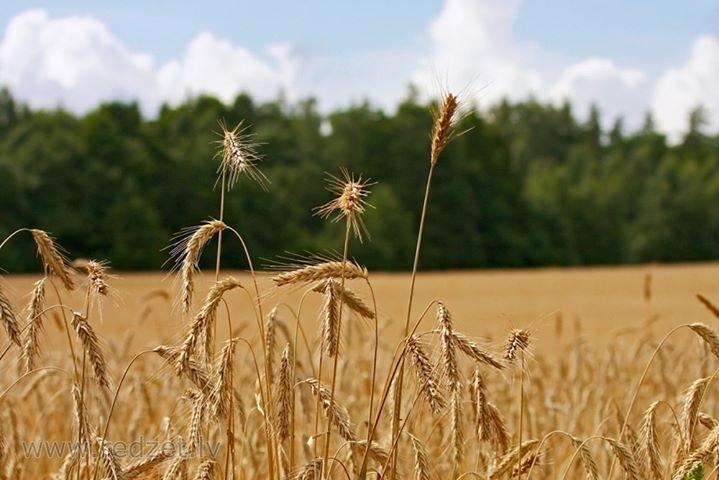 Zemnieku Saeima cover