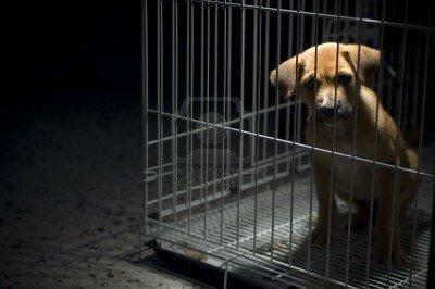 Tukuma dzīvnieku patversme cover