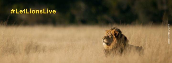 Panthera cover