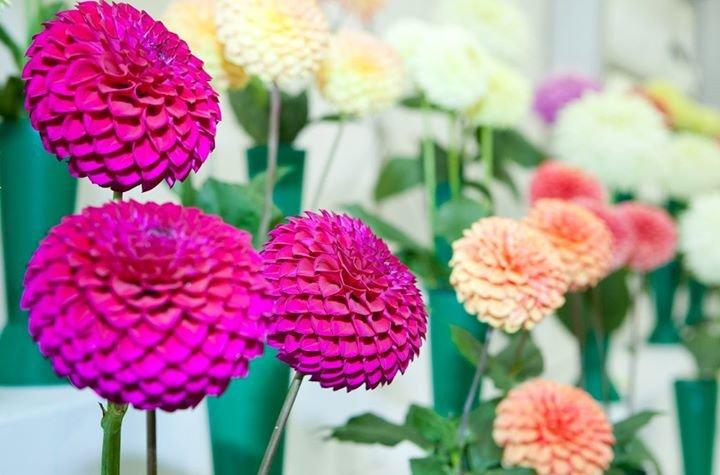 Shrewsbury Flower Show cover