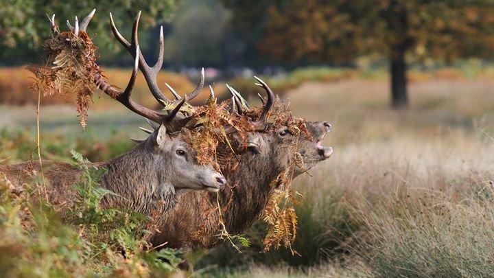 Deerland - Poľovníctvo cover