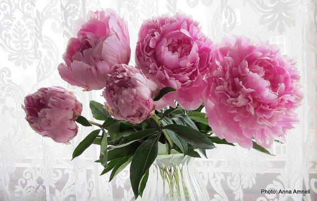 Jalka- ja kauneushoitola Bellissima cover