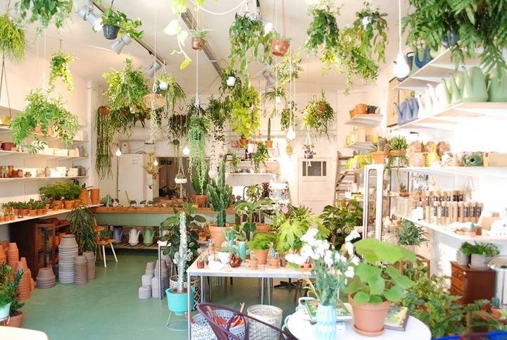Wildernis - Kamerplanten- & stadstuinwinkel cover