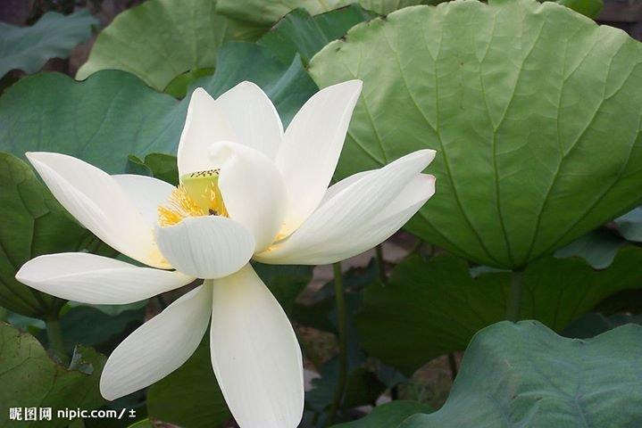 Kauneushuone Longzhu Shu cover