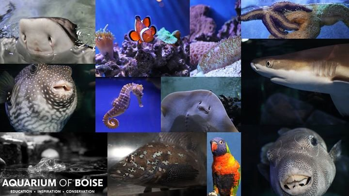 Aquarium of Boise cover