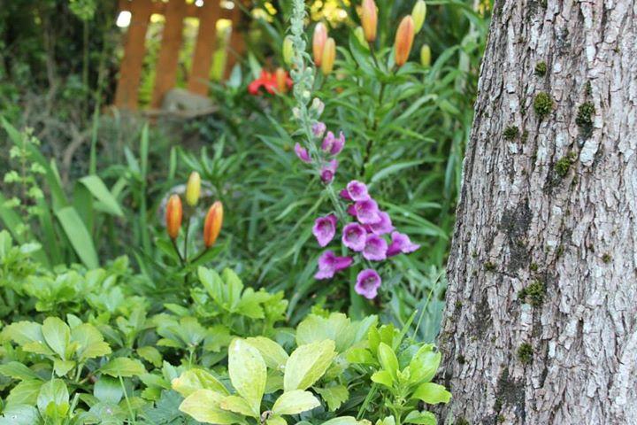 Wildwood Garden Design cover