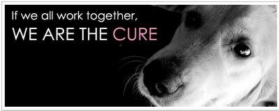 National Canine Cancer Foundation cover