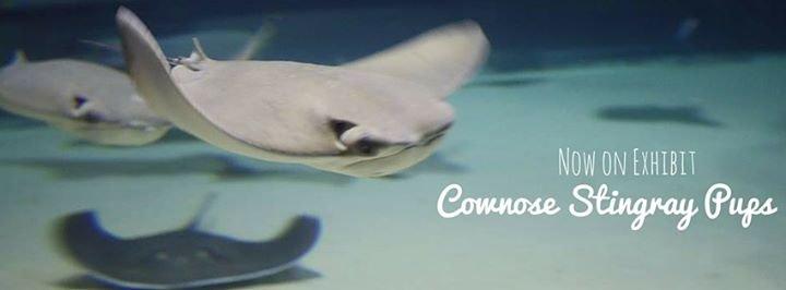 Greater Cleveland Aquarium cover
