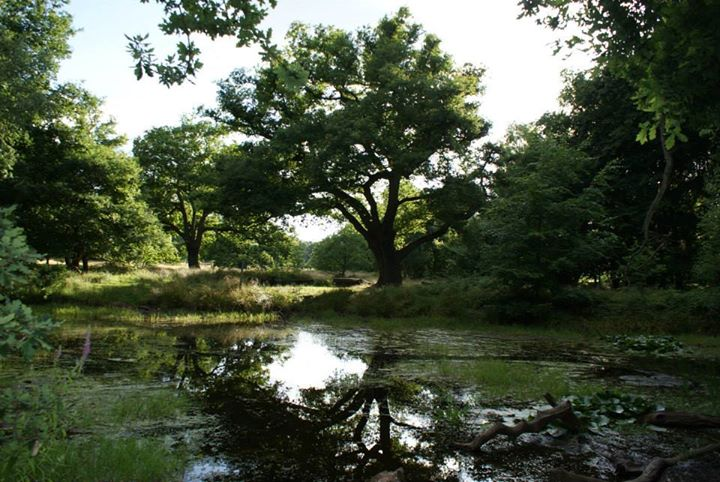 FSC Epping Forest cover