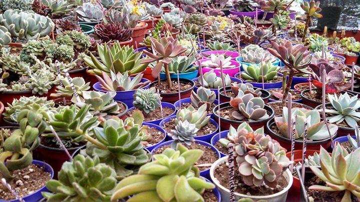 Mundo Cactus Villa Crespo. cover