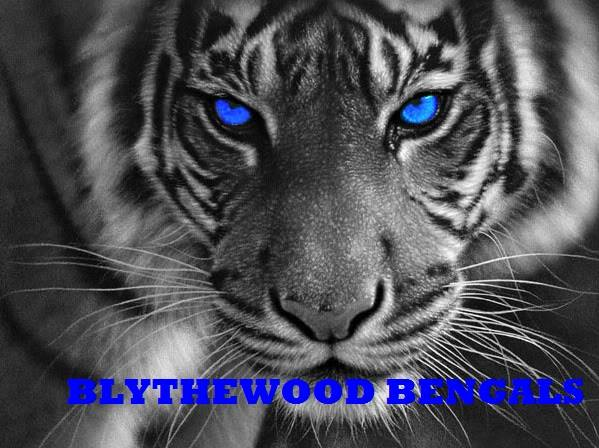 Blythewood Youth Football and Cheer cover