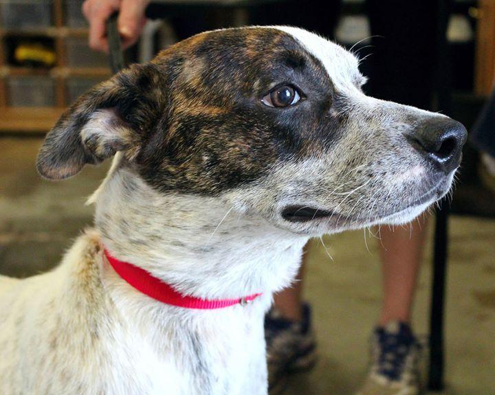 SOS Animal Adoption Center - Enterprise, Alabama cover