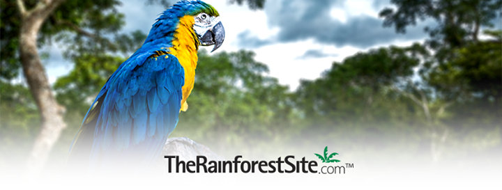 The Rainforest Site cover