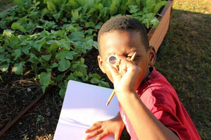 Schoolyard Roots cover