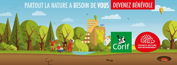Corif - Centre ornithologique Ile-de-France cover