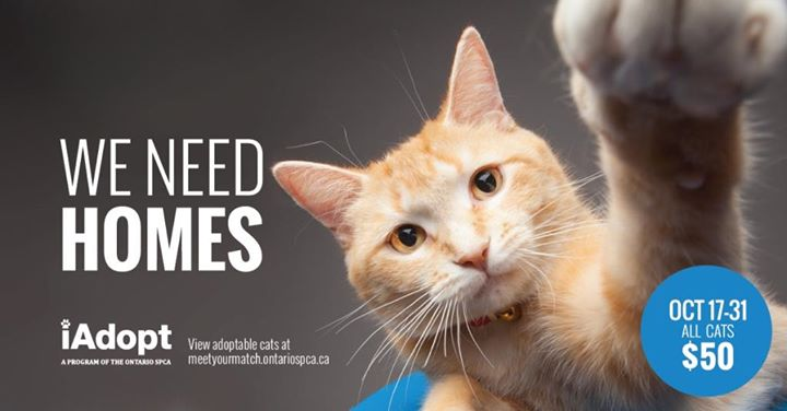 Ontario SPCA Orangeville & District Animal Centre cover
