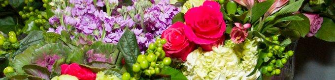 Floral Renaissance of Austin cover