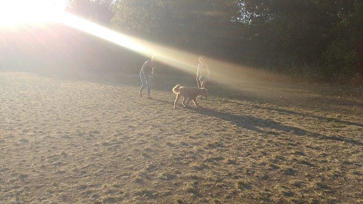 New England Dog Training Club cover