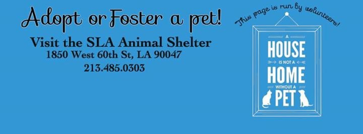 friends of south los angeles animal shelter los angeles united states
