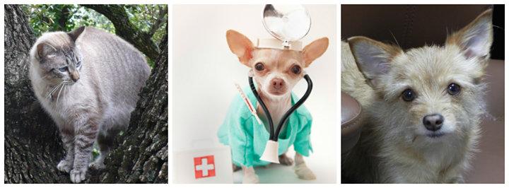 Burnet Road Animal Hospital cover
