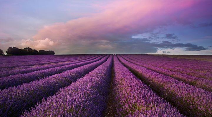 Lavender Retreat cover