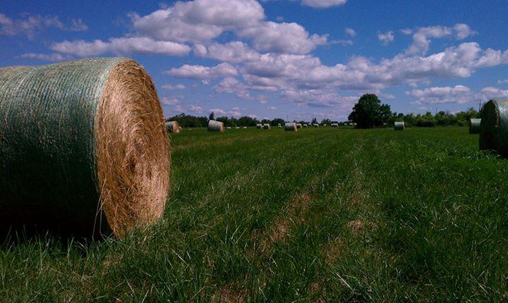 Virginia Cooperative Extension, Loudoun County cover