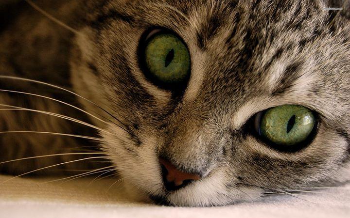 Cat Care Clinic Bellevue cover