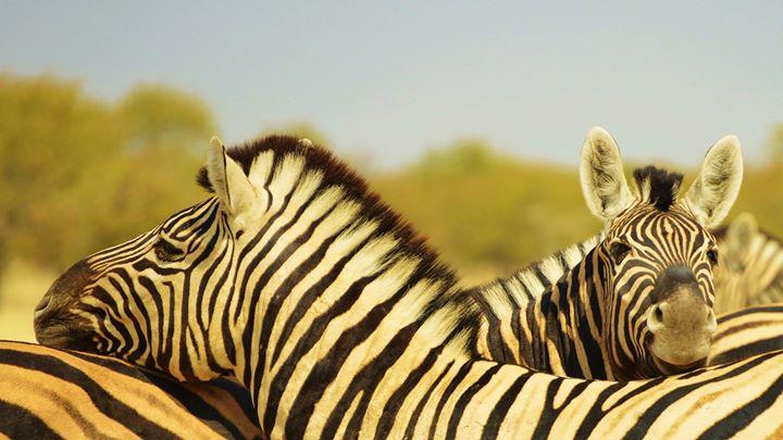 Etosha National Park cover