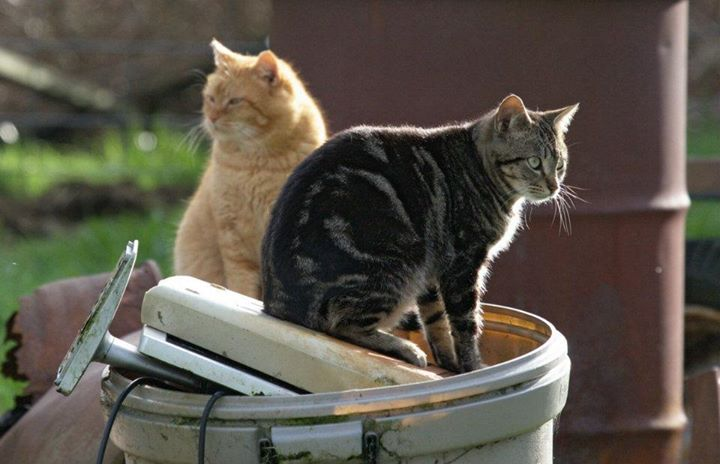 bleach and ammonia cat urine