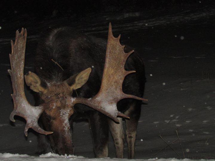 Moose Alley Cones cover