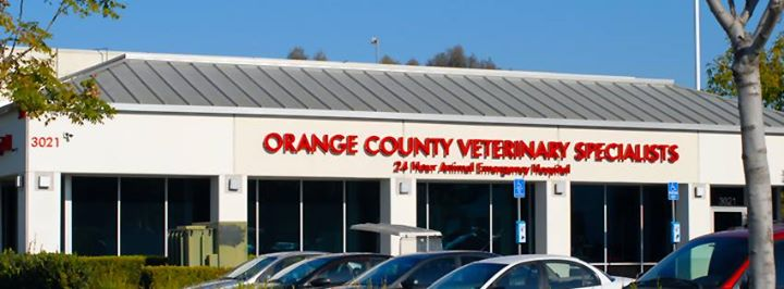 VCA Orange County Veterinary Specialists cover